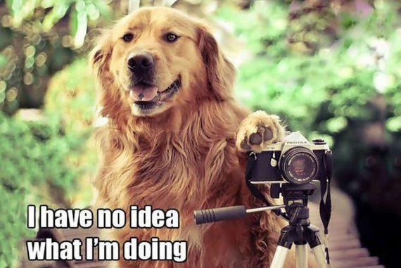 Shotkit Mastermind Dog