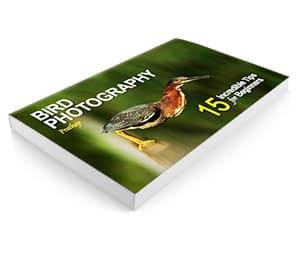 Bird photography ebook