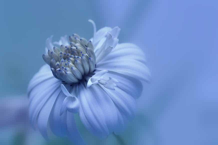 Daydream Blue DSC_0369