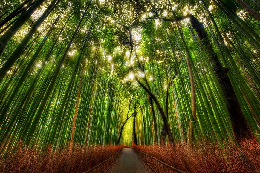 """Today's daily photo was taken while exploring the wilds outside of Kyoto a few weeks ago.  It was a beautiful place!  The walk took me into this giant bamboo forest.  After strolling through it for a short eternity, I set up for shot.  This is a standard 5-exposure HDR; it was shot with a 14-24mm lens.  For those of you new to the site, you can find out more about my process in the HDR Tutorial.Some Twitter Lists for You!As you guys know, I've been using Twitter for the past 27 years or so.  Over that time, I've built up a good list of people to follow.  Now, I can share this list and more very easily with you.  When you visit the links below, you can """"Follow"""" the list.  Or, you can also go through and follow the individuals.  Any questions?  Just ask below!Stuck In Customs Community - This is a list of everyone around here that has signed up on this thread (you can sign up there too!).  This is a great """"channel"""" to listen into to hear everything that's going on with all of us!  If you ever need advice, have questions, or just want to share, be sure to follow the people inside and talk it up... that's what Twitter is for! *Make Recommendations for this list here!Art for the Right Brain - Here is a collection of inspirational artists, designers, illustrators, and the like that I find inspirational.  I didn't really add any photographers to this list... <a rel=""""nofollow"""" href=""""http://listorious.com/TreyRatcliff/art-for-your-right-bra"""