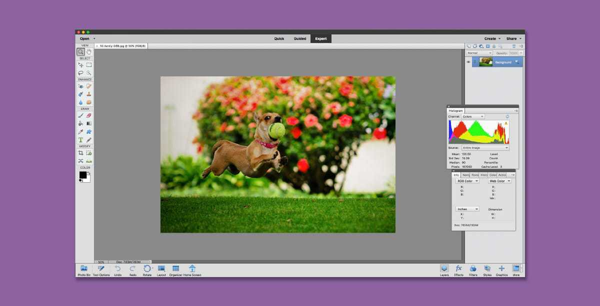 Adobe Photoshop Elements - alternative to buy photoshop, but no cloud storage. Should you use Photoshop or not?