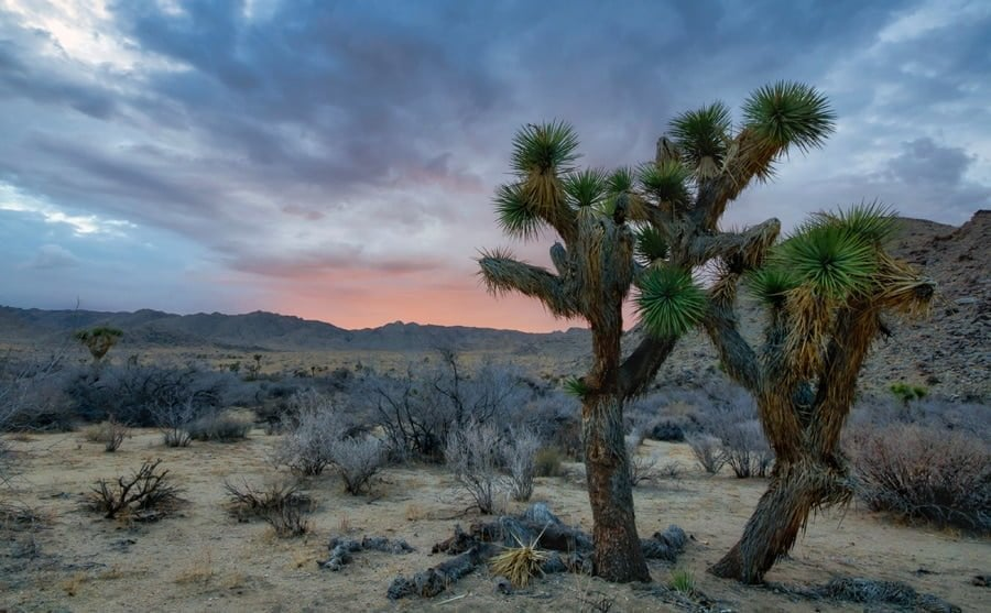 Capturing the sunset at Joshua Tree National forest - sunset photos