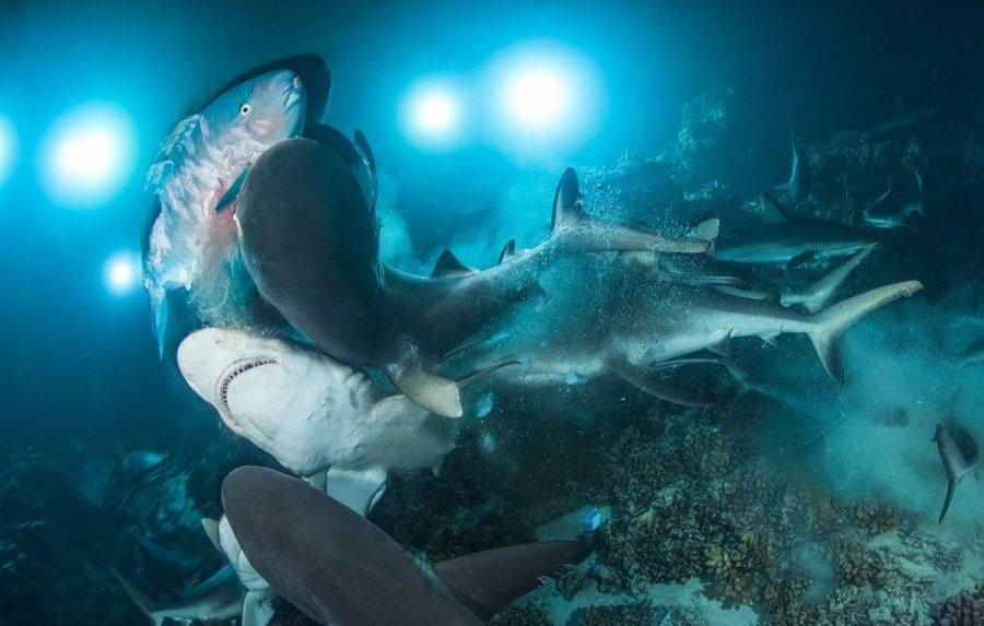 Sharks Hunting