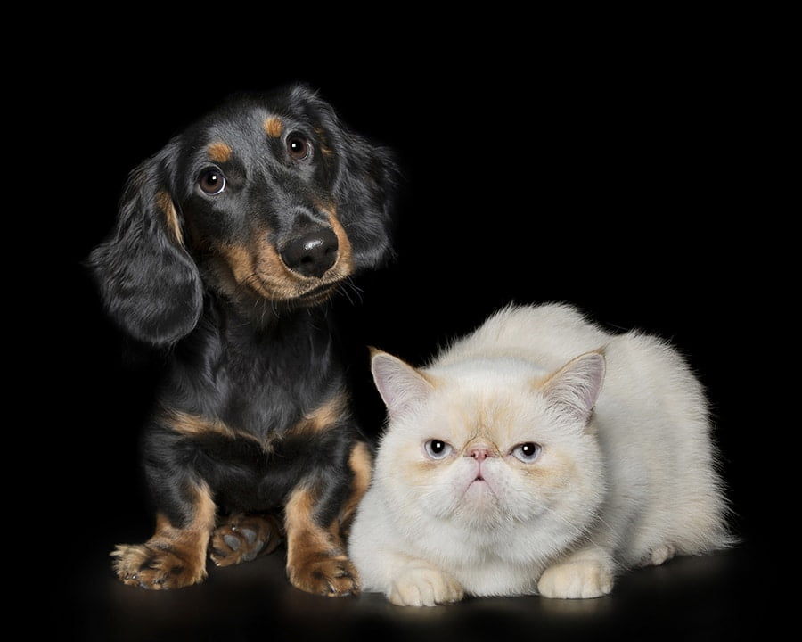 Pet Photography 16