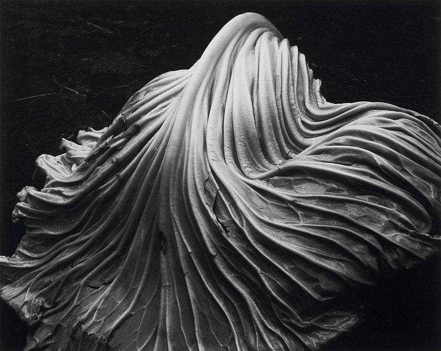 Edward Weston Photography - famous photographers