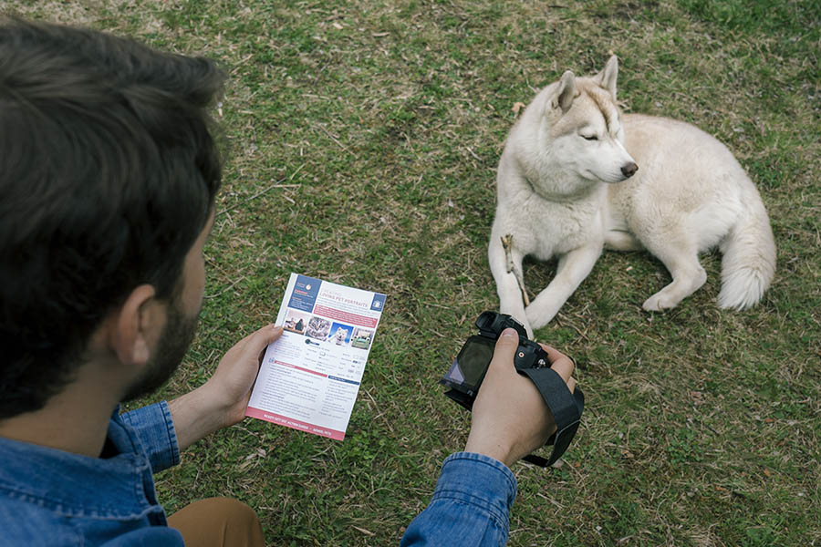 Pet Photography in Action