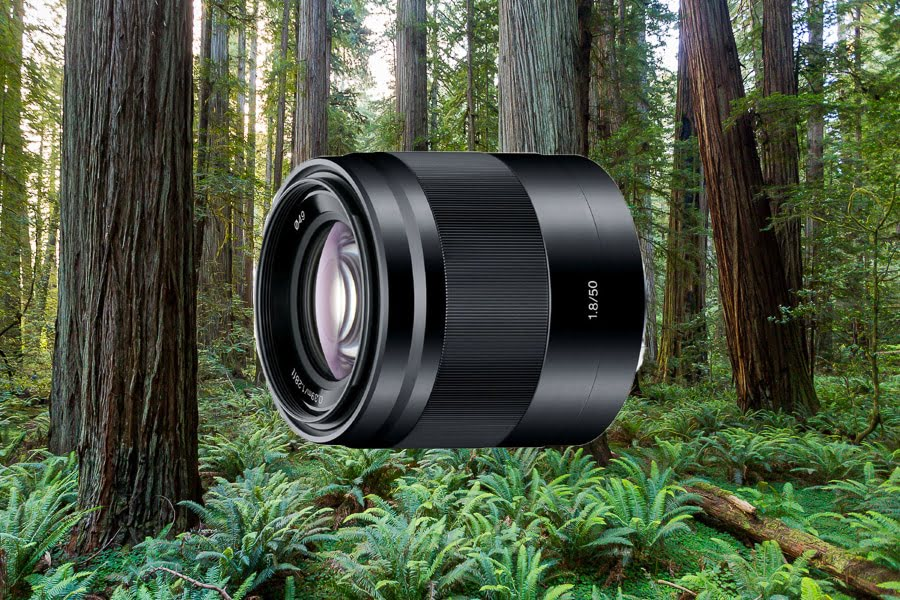 Best Lenses for Sony a6500 - Sony 50mm f1.8