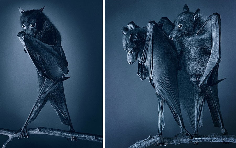 Tim Flach photography portrait photographer