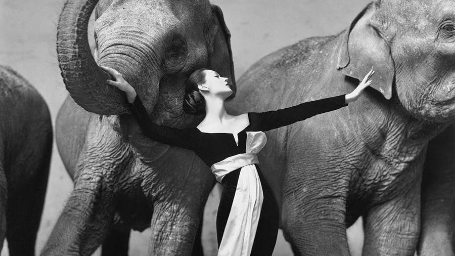 Richard Avedon portraits photographers