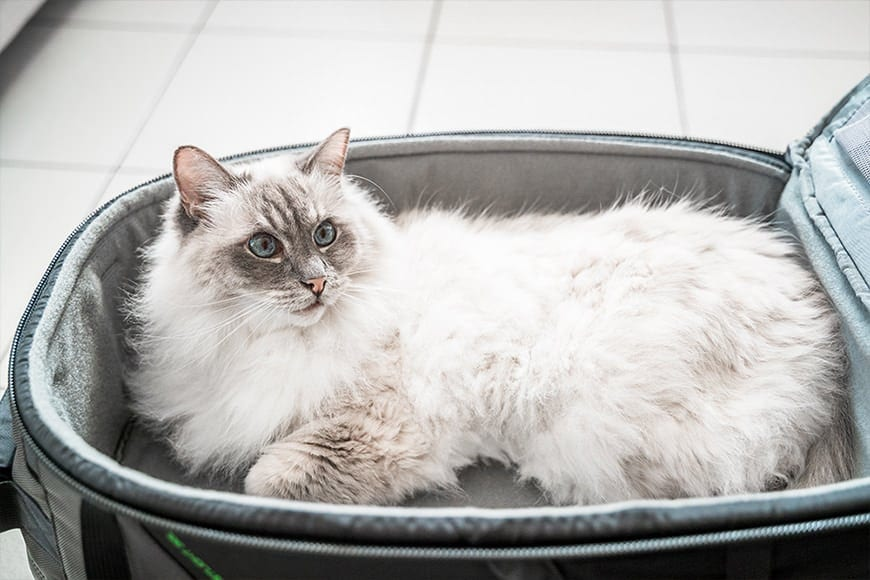 The Mindshift First Light 30L is also a cat bed