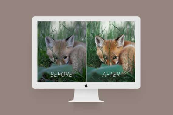 Lightroom Before After Examples