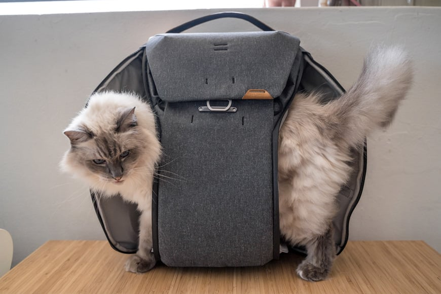 When you cannot decide on which side you wish to access via on the Everyday Backpack V2, why not use both like this guy?
