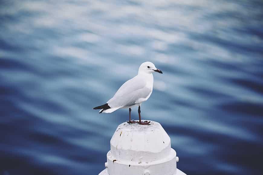 seagull bokeh tamron