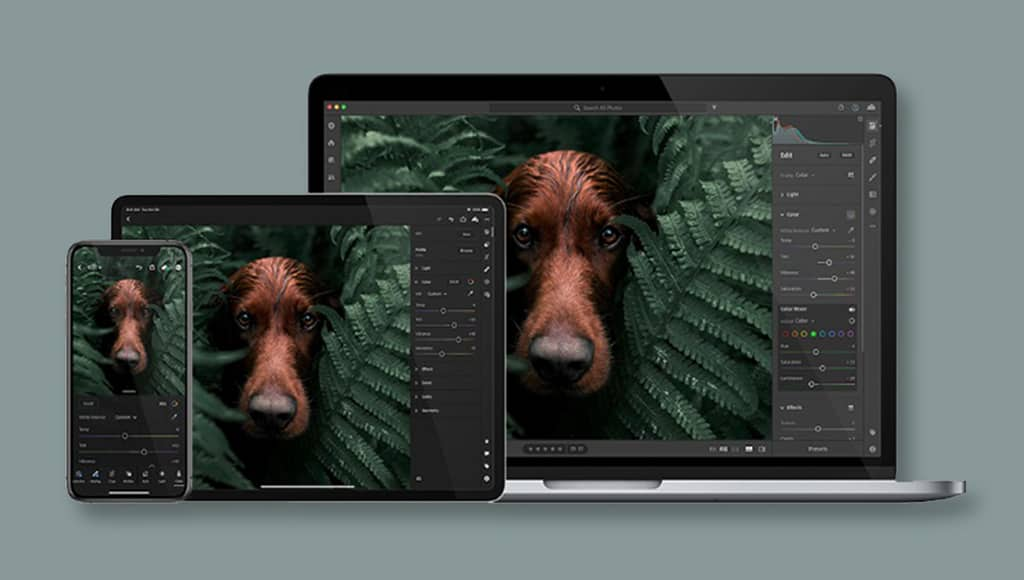 adobe lightroom with cloud storage for raw photo in the cloud
