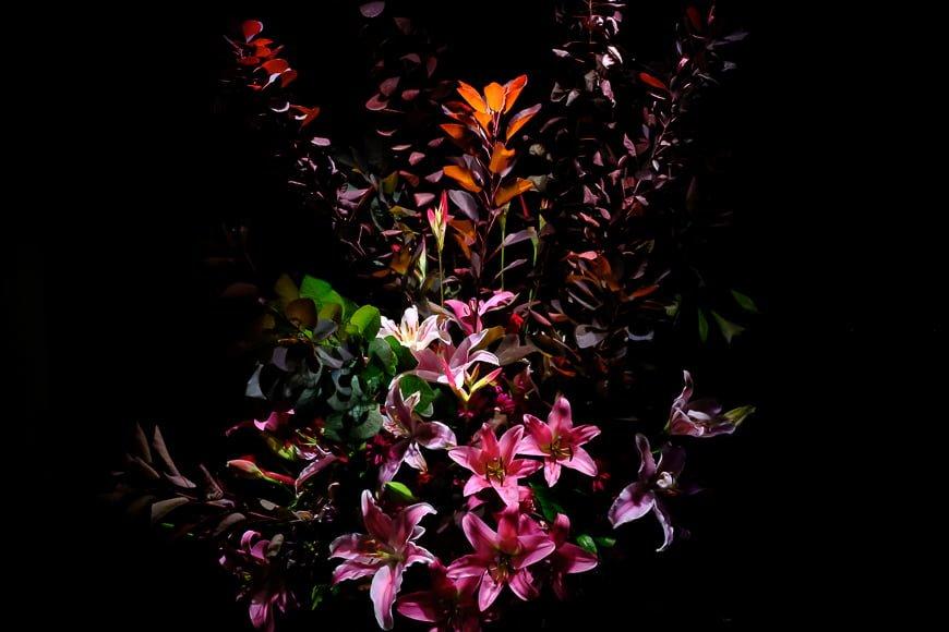 flowers on dark background