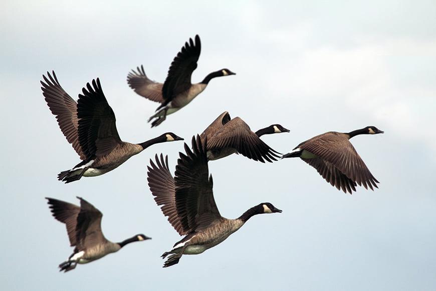 birds-in-flight-featured