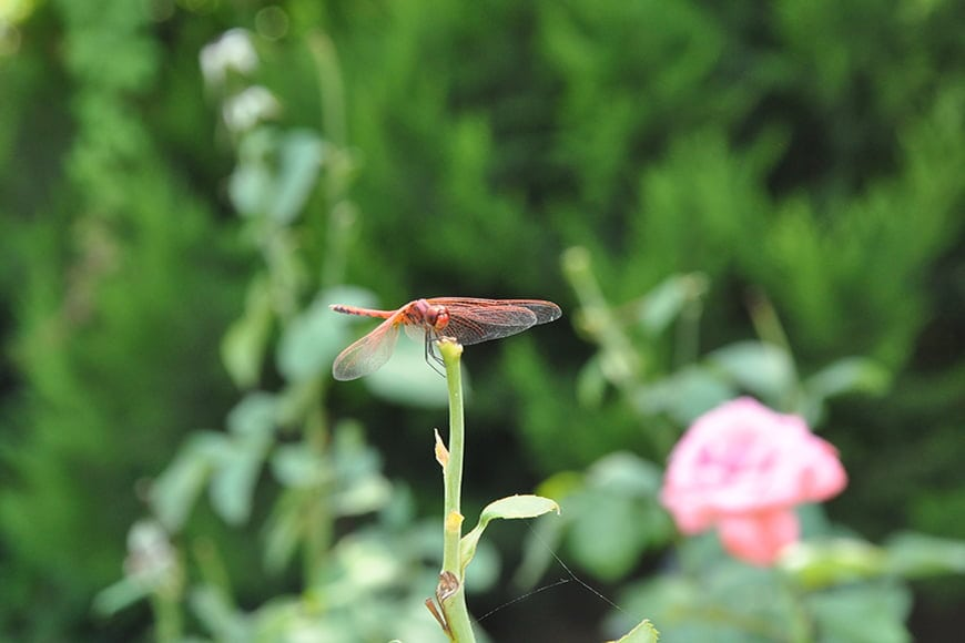 Dragonflies are fast insects so capturing more background is an option