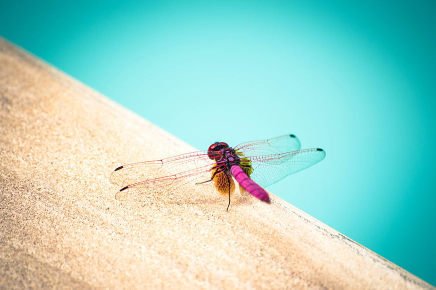 If you like dragonfly photography try one of these editing tips