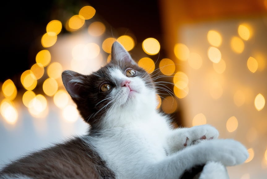 You can use string lights or street lights behind your subject to create those glowing orbs in photos.