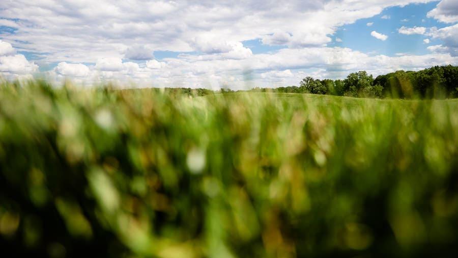 Panasonic Leica 10mm-25mm f/1.7 lens sample photo of landscape