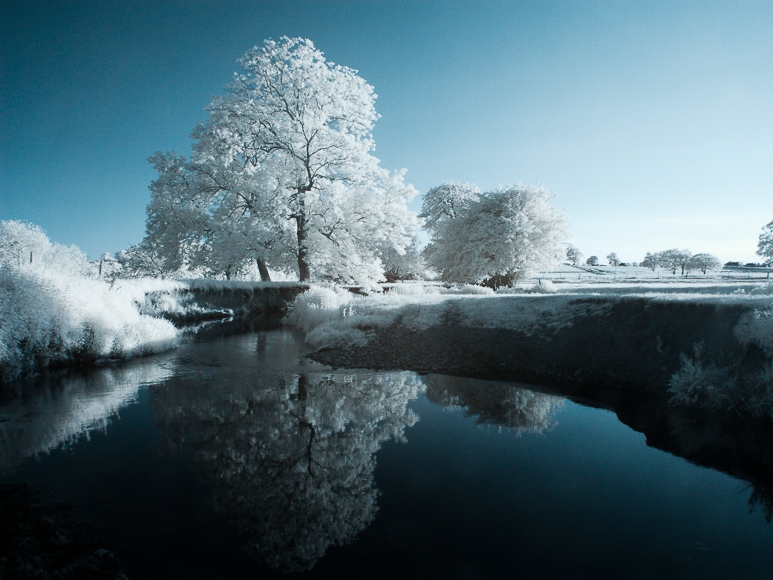 Infrared image of trees reflected in a lake.