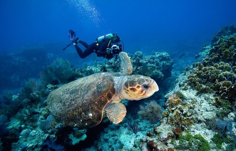 Underwater photography guide: Underwater photographers need the right diving gear to capture photos of sea life.