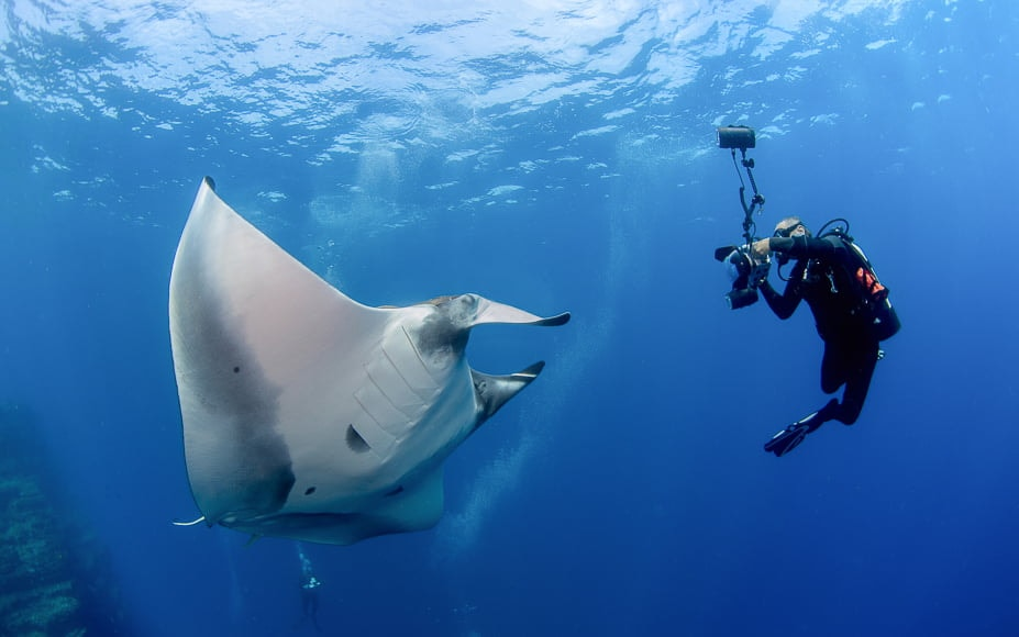 Check an underwater photography guide to shooting sea life to get the best photos of your subject.