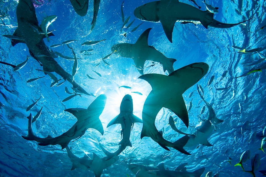 Underwater photography tips – take photos from below your subject for beautiful silhouettes. Photo of sharks.