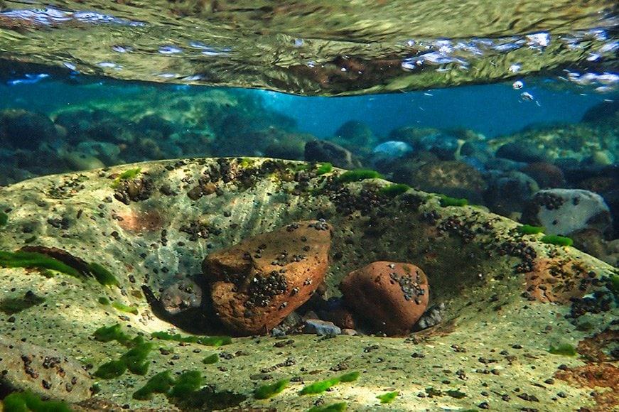 tg-6 underwater photography
