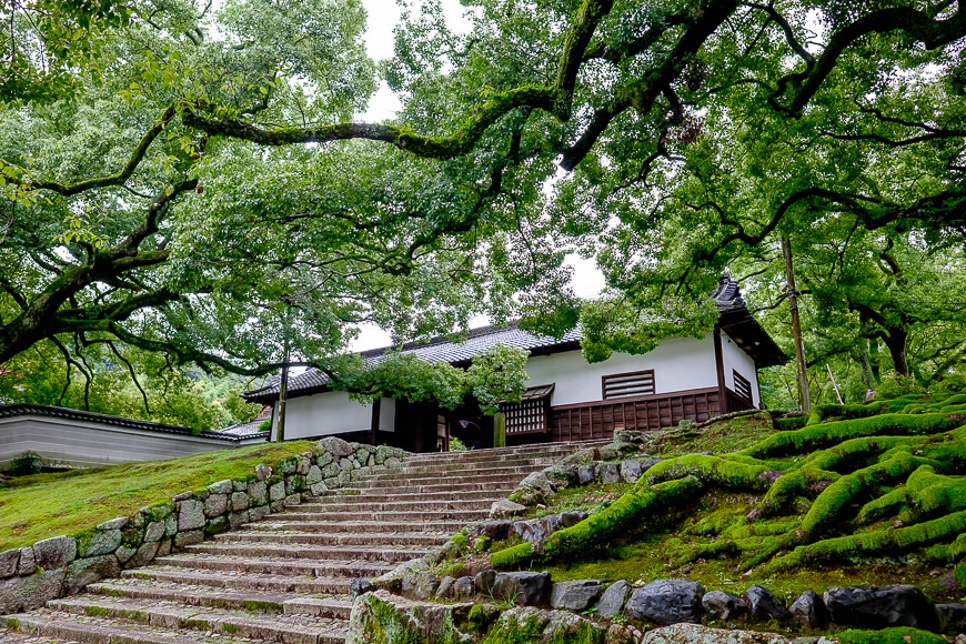 Beautiful trees surrounding stairs leading to a Japanese building