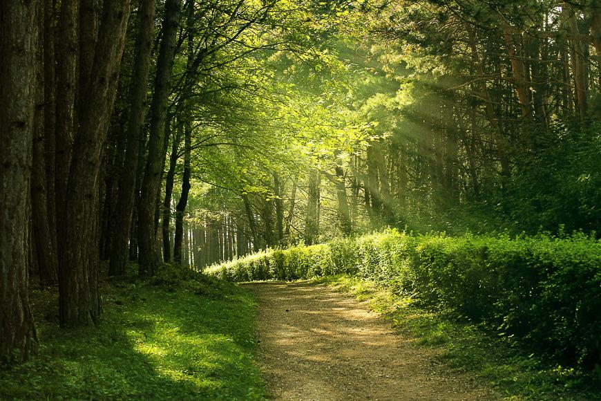 forest photography light between tress