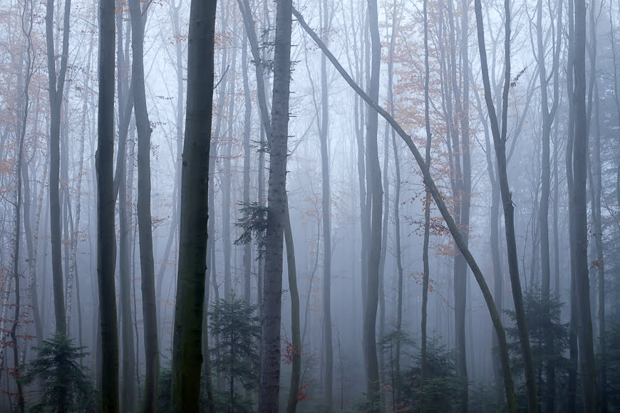 Forest photography in foggy conditions.