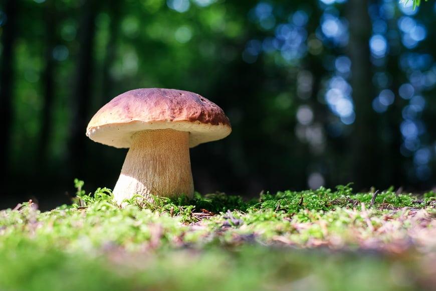 Wild mushroom on moss.