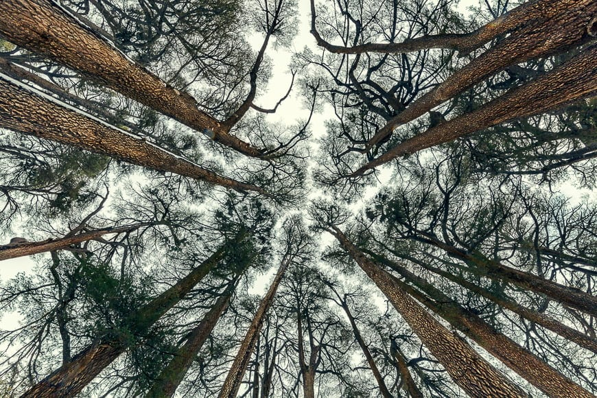 Crown shyness in tree canopy.
