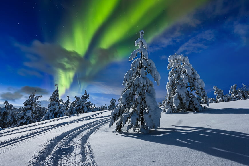 Northern lights over pine forest.