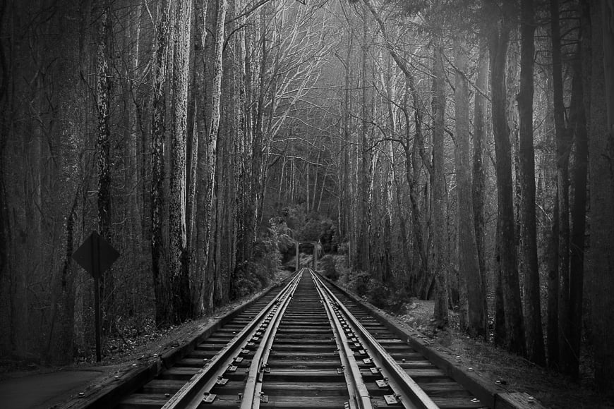 Black and white forest with train track.