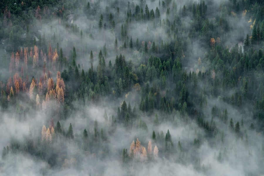forest-photography-featured