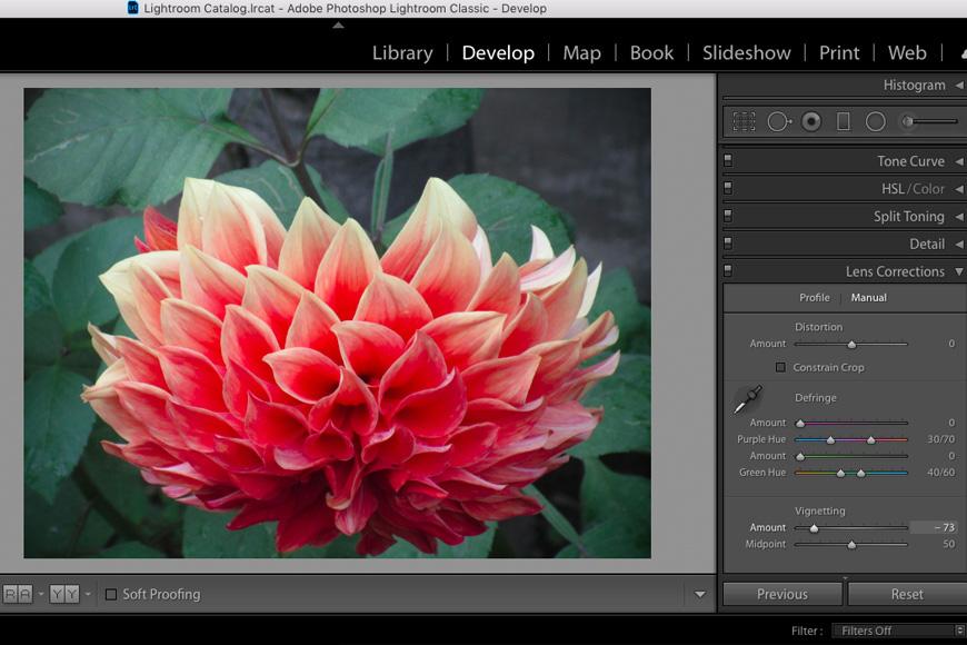 Lightroom vignette using radial filter on an image of a flower