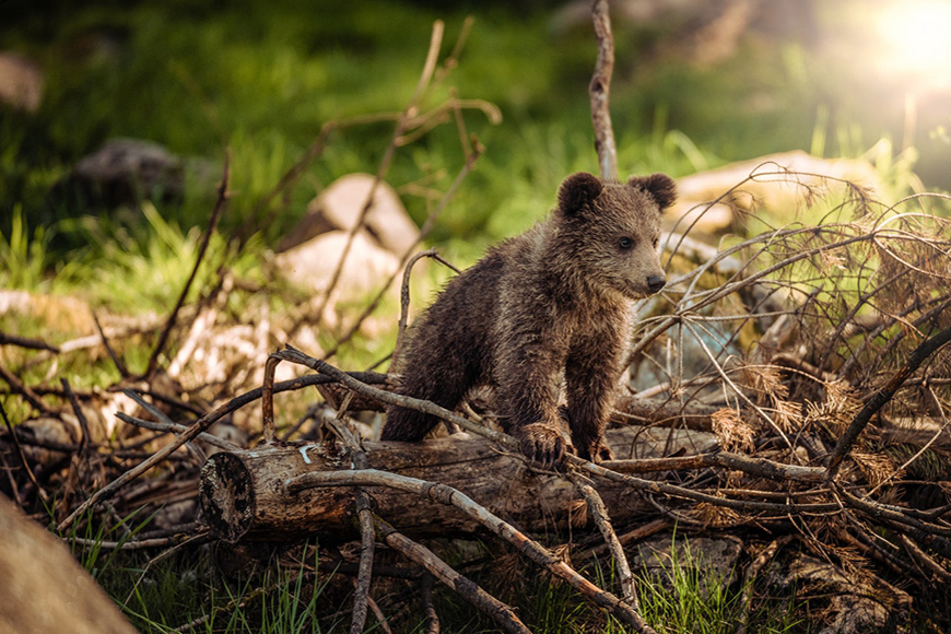 photo of a cub in the wildlife