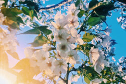 spring-photography-featured
