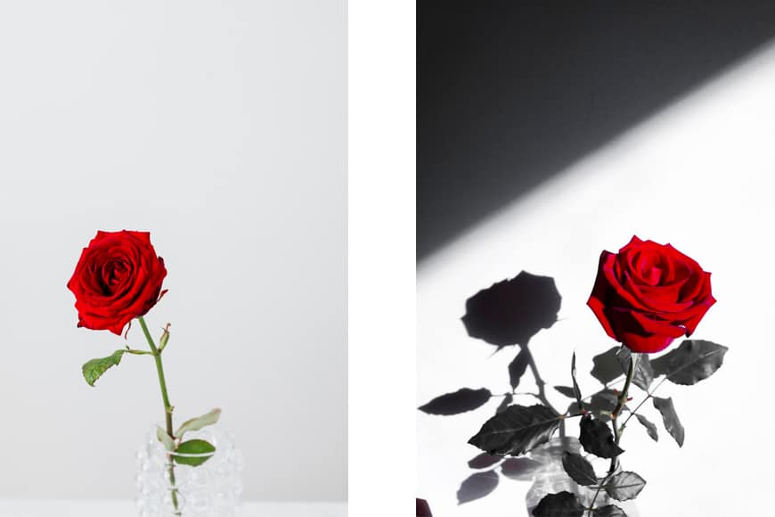 Soft light vs hard light with rose still life