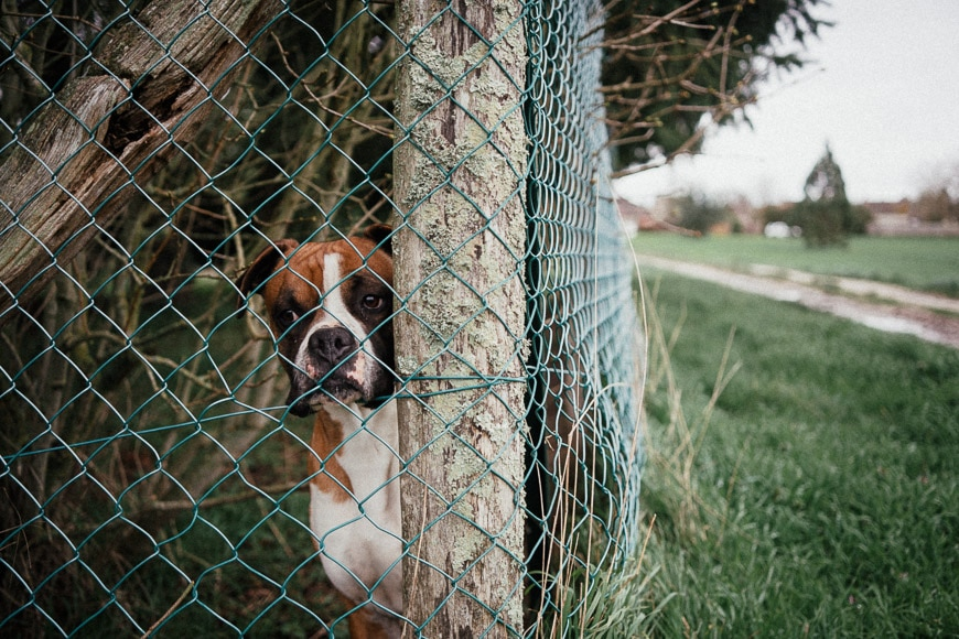 A dog hiding behind a wire fence