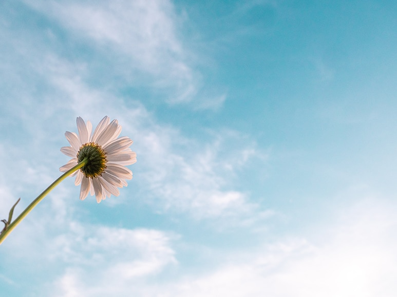flower looking up at sky