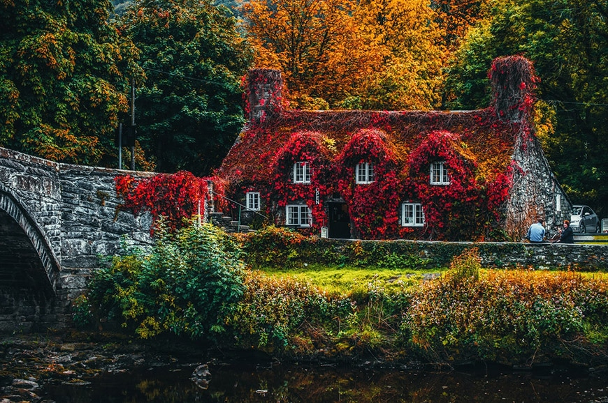Rustic cottage covered in red leaves