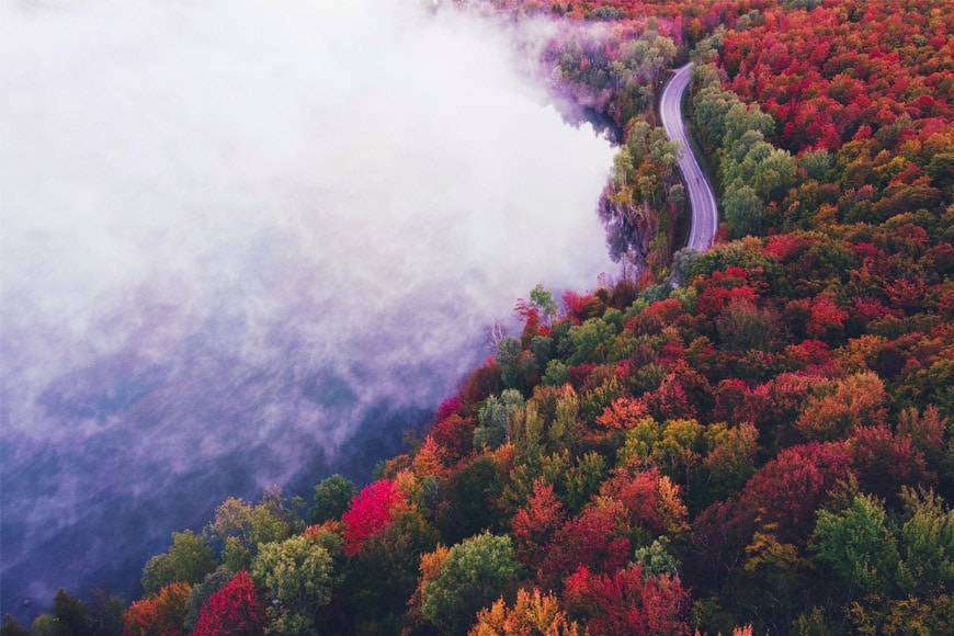 Aerial photo of an autumn forest