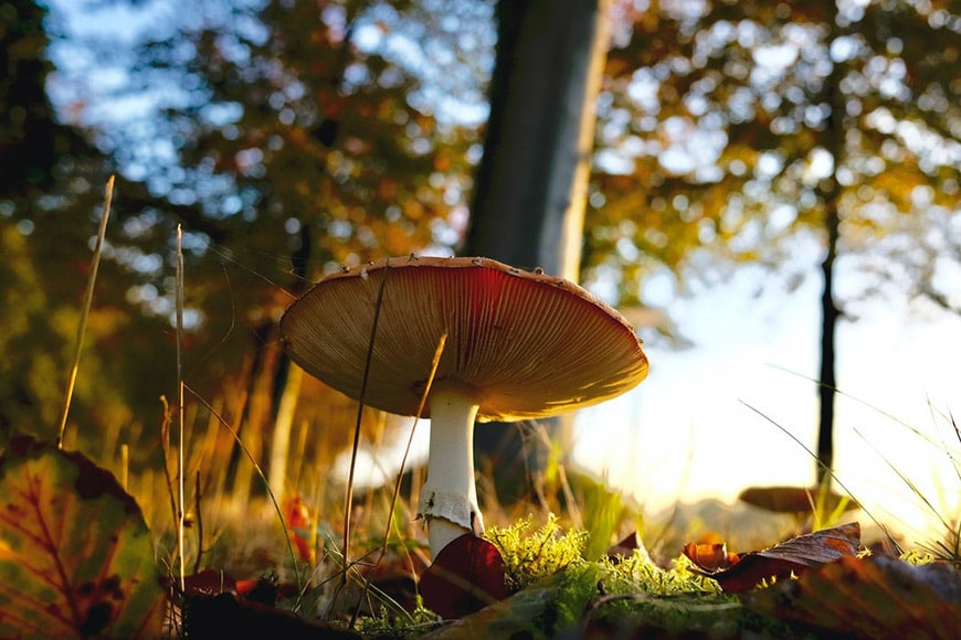 Toadstool shot from ground level