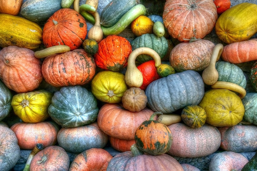 Pumpkins stacked in all different colors