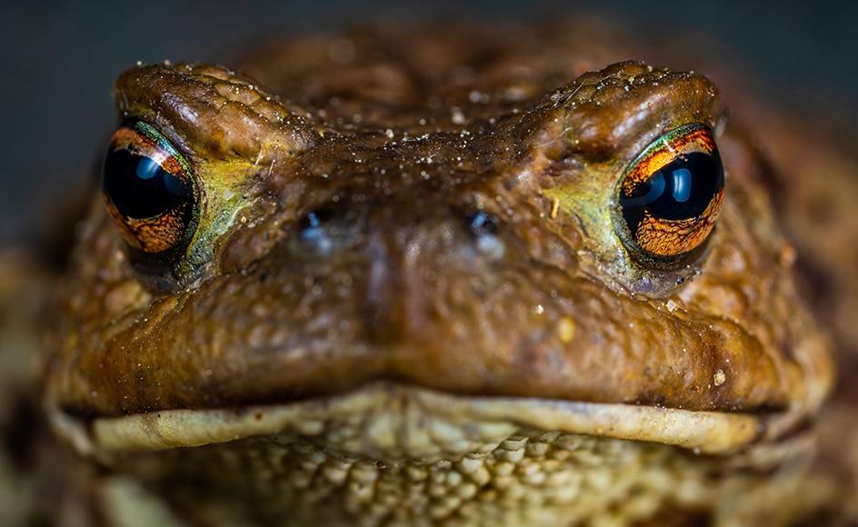 Bumpy frog skin close up