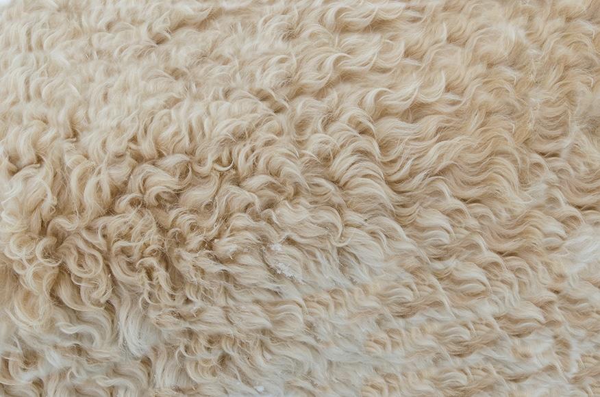 Wooly fur