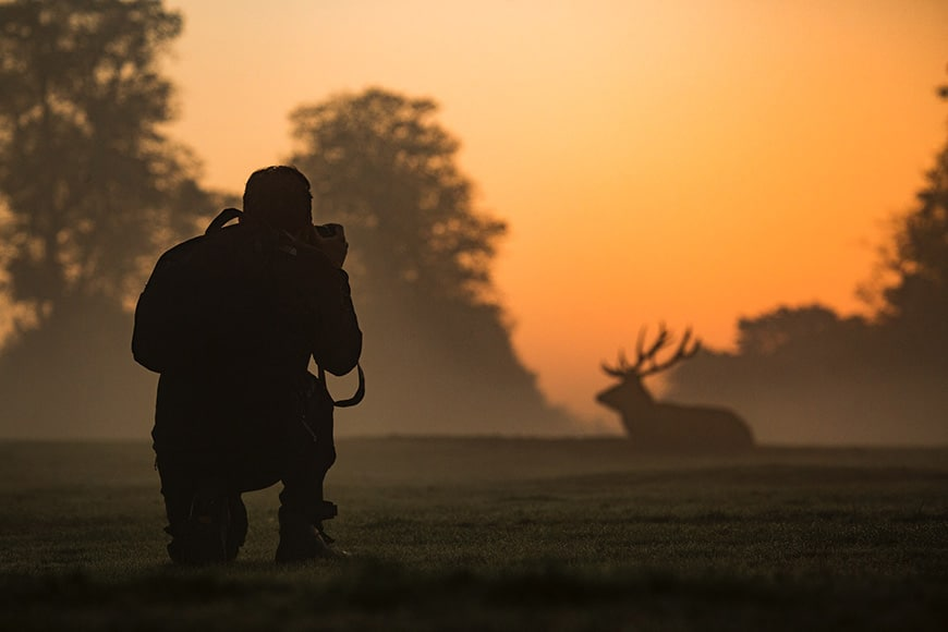 Photographer shooting photo of a deer at sunset